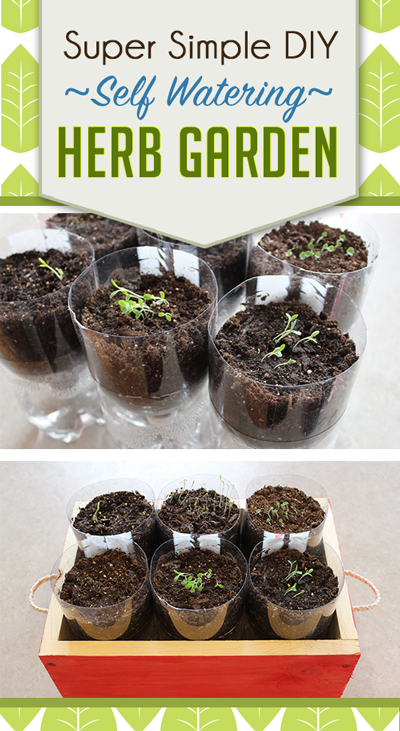 Pop bottles made into self-watering herb planters because herbs can be finicky about water, take the guess work out of herb gardening and watch them thrive!