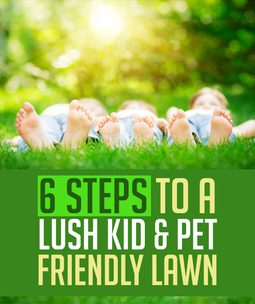 If you have kids & pets playing in your yard, avoid traditional chemical solutions and use these 6 tips to still have a lush, beautiful lawn!